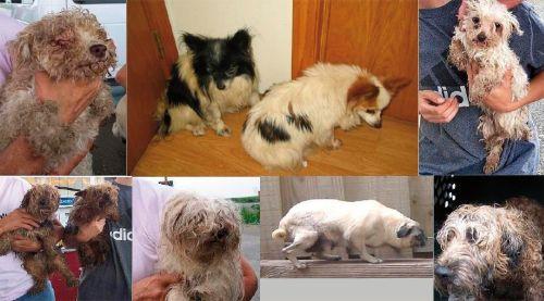 megmentett-kutyak