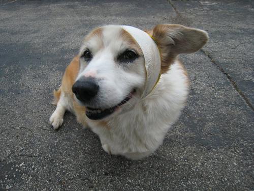kutyaklinika