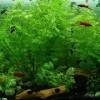 Az édesvízi akvárium kialakítása