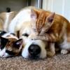 Kutya-macska védőoltások: a legfontosabb tudnivalók