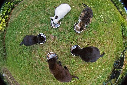 macskak-esznek