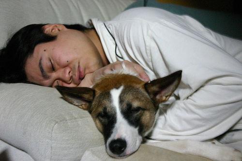 alvas-kutyaval