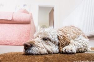 Hogy szüntessük meg a kutya kutyaszagát?