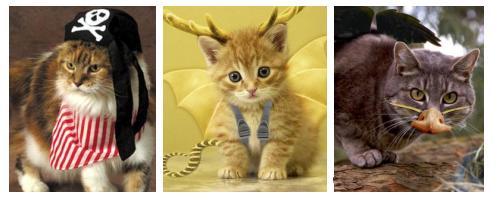 macska-jelmezek