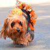 Állati Halloween: Milyen jelmezt válassz?