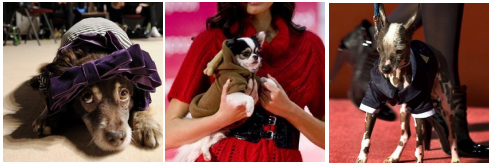 kutyaruha, kutya divat, fashion