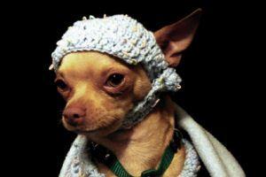 Milyen idén az őszi/téli kutyadivat?
