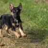 Félek a kutyáktól! - Segítség 3 lépésben