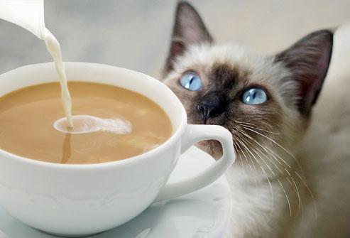 macska-koldul
