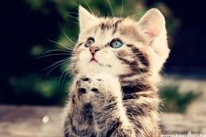 A macskák tényleg nem érzik az édes ízt?