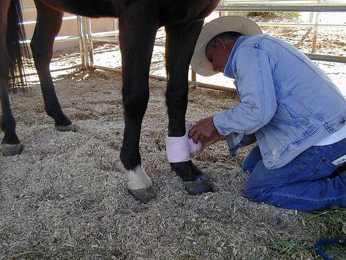 Ló lábának kötözése