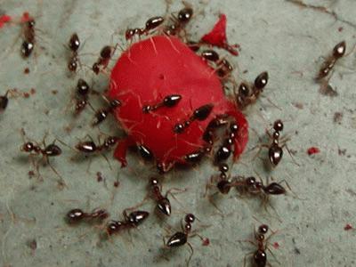 hangyák egy morzsán