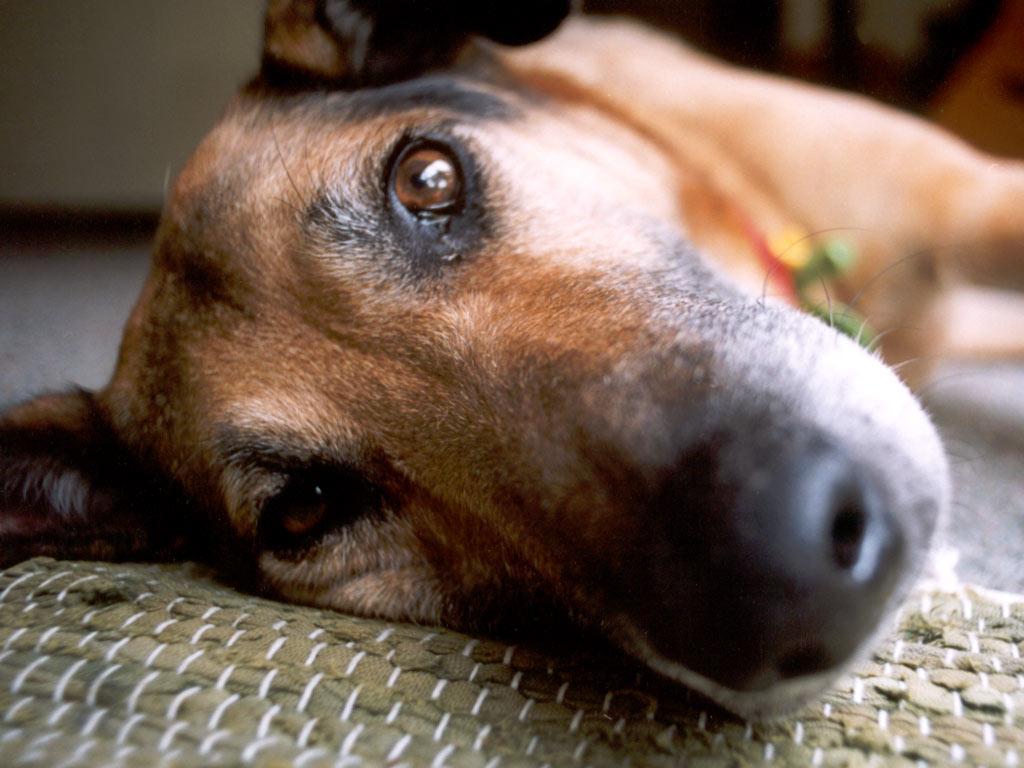 Epilepsziás kutya