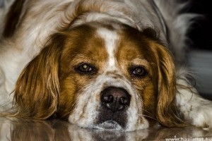 Mi a különbség a kutya epilepszia és az alkalmi roham között?