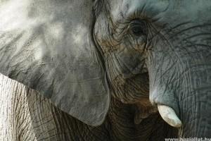 Élet-rekordok: a hosszú élet titka az állatoknál