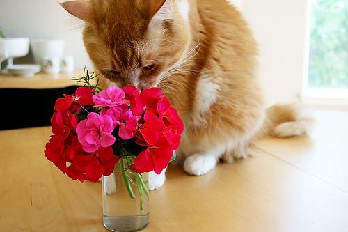 Macska és virágok