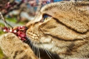 Hogyan szagol, szaglászik a macska?