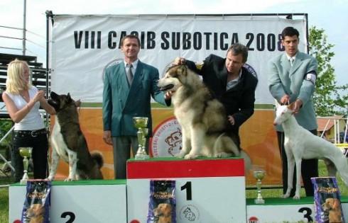 kutyakiállítás