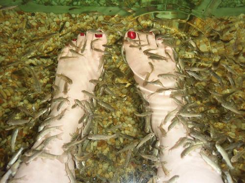 Terápiás halak