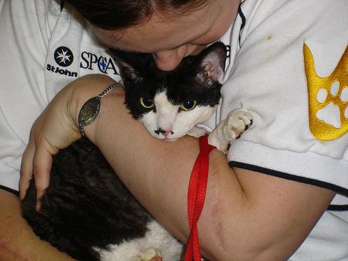 terápiás macska