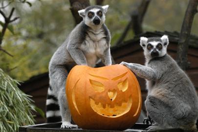 Halloween az állatkertben