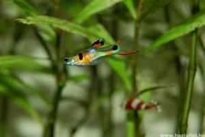 Passzentos halak, avagy milyen hal való nekünk?