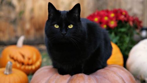 fekete macska legendák