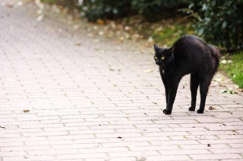 Fekete macska átment előttem az úton