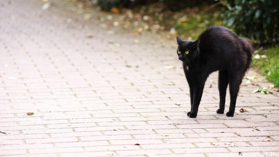 Fekete macskás hiedelmek