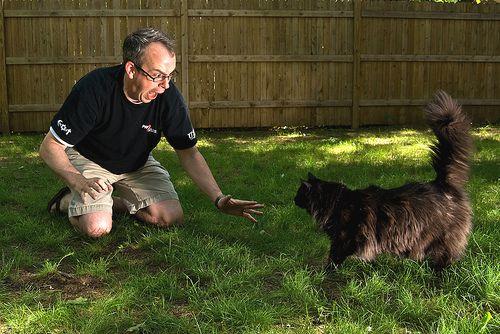 babonas-ferfi-megijed-a-fekete-macskatol