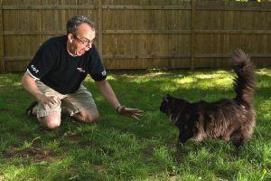 Vajat a macska lábára - avagy a legfurább állatos babonák