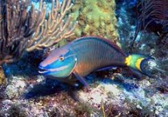 nyálkás hal