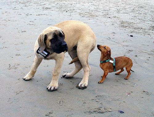 kis kutya, nagy kutya, fél