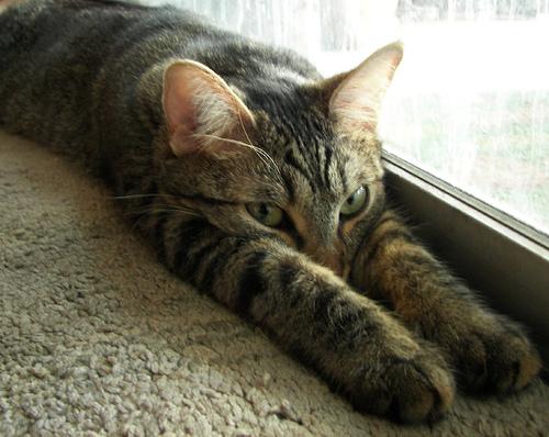 macska, fél, okos