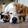 Félős kutya, rettegő macska - pánikbeteg állatok
