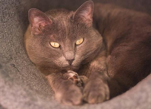 Lábadozó cica