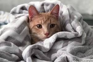 Minden, amit a macskanátháról tudni kell