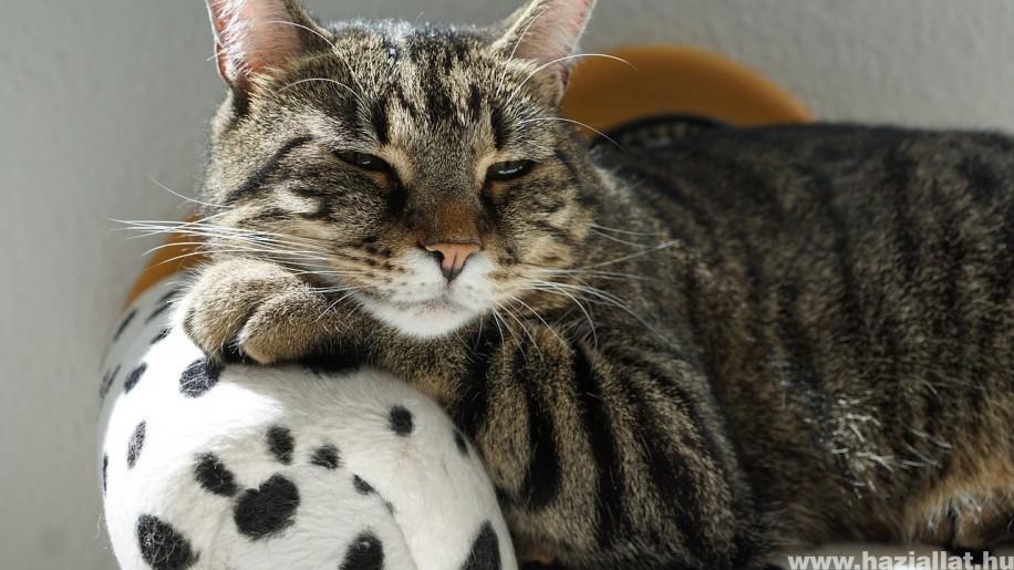 Macska kezdőcsomag: az első bevásárlókörút
