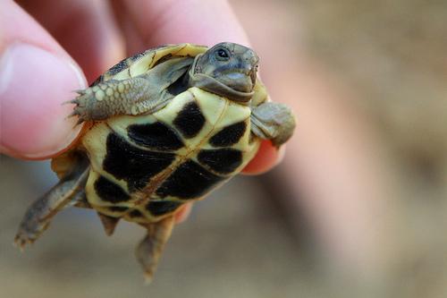 teknős a kézben