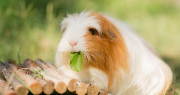 Kisemlősök etetése: rágcsálni való tippek