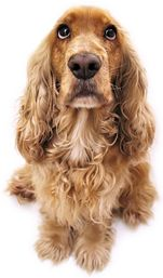kutya, büntetés, jutalom