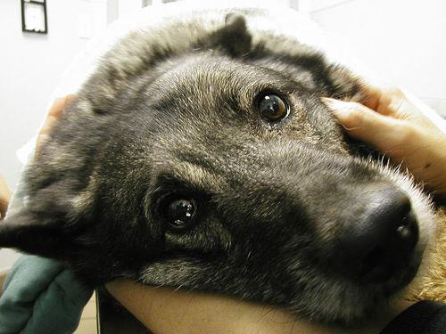2_original A kutyának nem szabad embereknek való fájdalomcsillapítót adni!