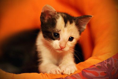 Az Aspirin hatóanyaga kutyákra és macskákra egyaránt mérgező!
