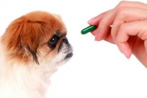Nekünk orvosság, nekik méreg! - háziállatokra veszélyes gyógyszerek