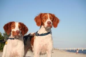 Kutyák a strandon?