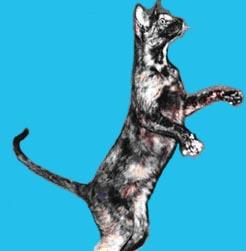 Radma von Jaegerhof, a keleti rövidszőrű macska, a Peterbald fajta alapító nősténye