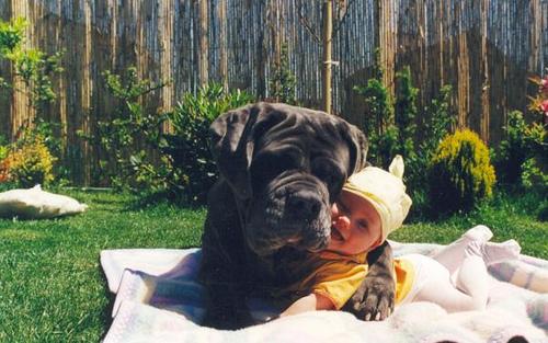 gyerek, kutya, kisbaba