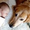 A kutya féltékeny lehet az új kisbabára