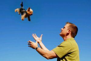 Kutyával repülni: hogyan, mennyiért?