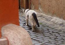 kóbor macska, kóbor állat